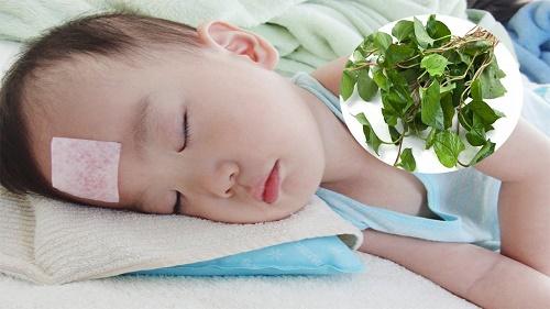 Rau diếp cá trị sốt ở trẻ em