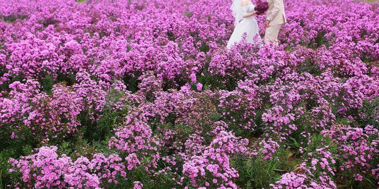 Hoa Thạch Thảo tím (Ảnh sưu tầm)