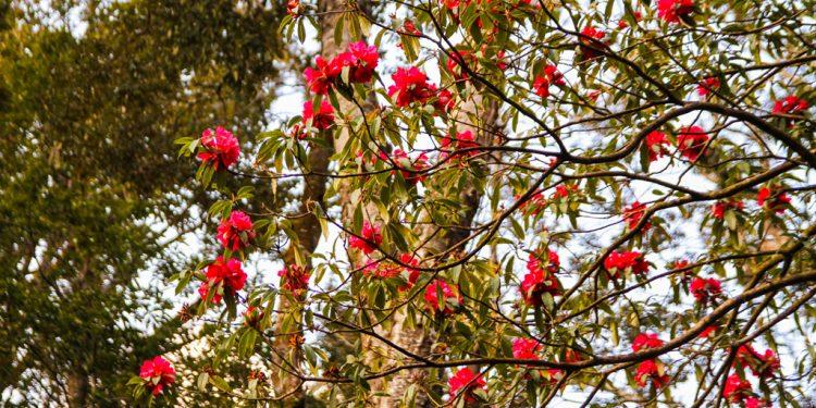 Những loài hoa sinh trưởng tại đỉnh Bạch Mộc Lương Tử (Ảnh sưu tầm)