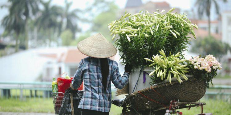 Hoa Loa Kèn trên những xe hàng rong tại Hà Nội (Ảnh sưu tầm)
