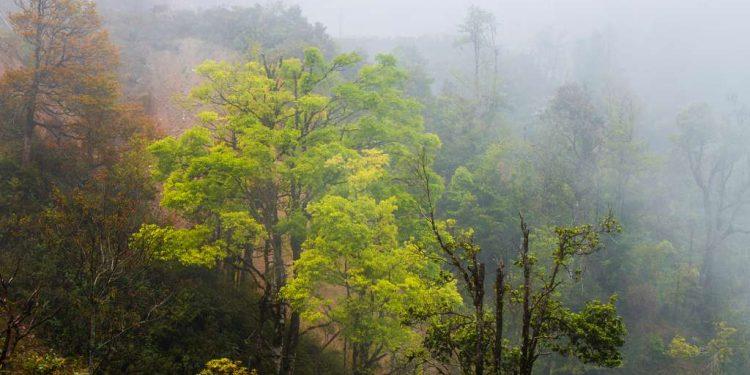 Mây lãng đãng khắp núi rừng (Ảnh sưu tầm)