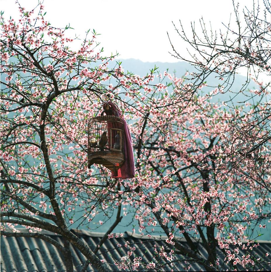 Mùa Xuân về trên khắp rẻo cao (Ảnh sưu tầm)