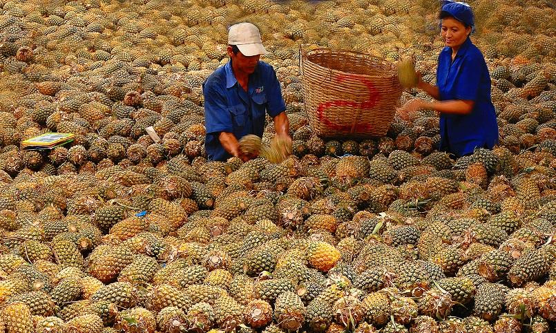 Những mùa trái cây nổi tiếng ở miền Tây 16