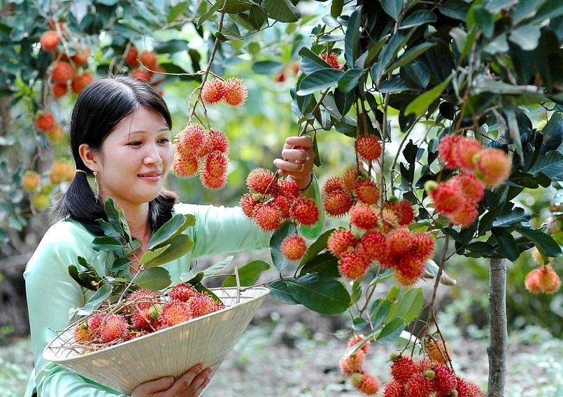 Danh sách các khu miệt vườn trái cây nổi tiếng ở miền Tây 9