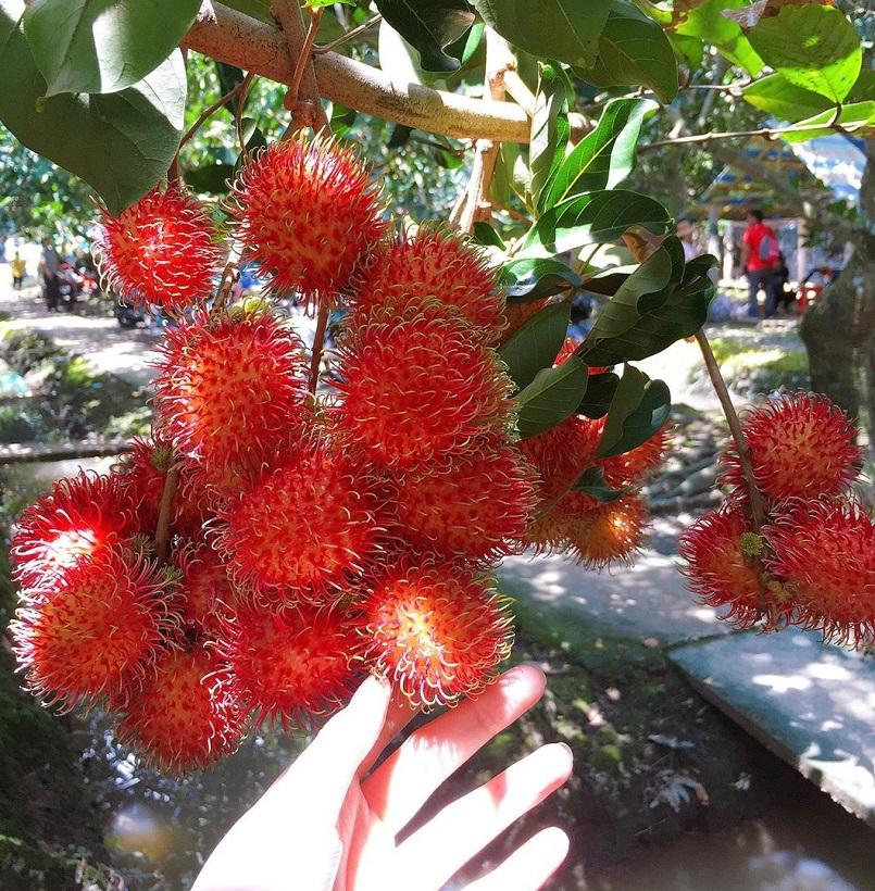 Những mùa trái cây nổi tiếng ở miền Tây 1
