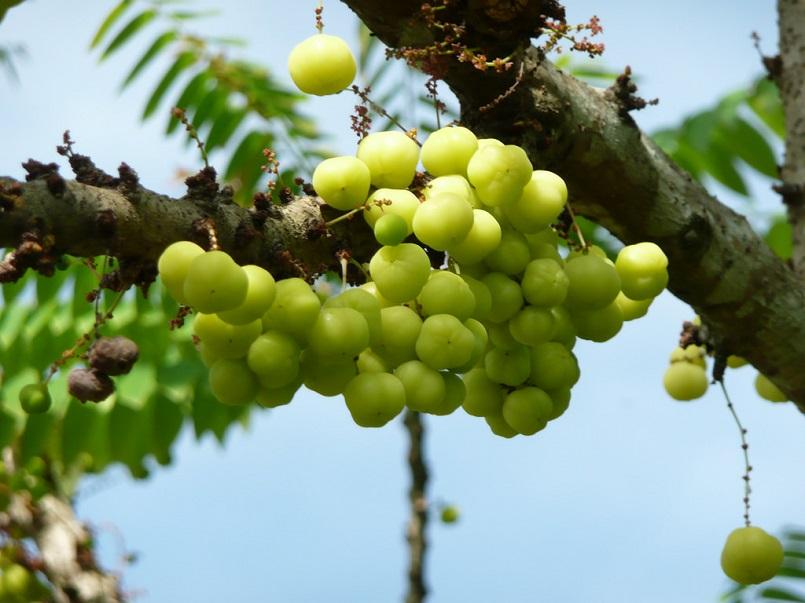 Những mùa trái cây nổi tiếng ở miền Tây 11