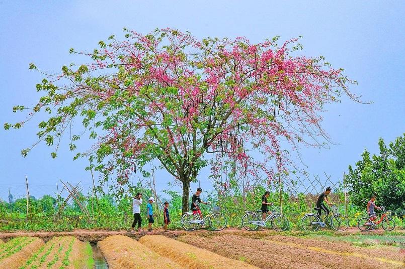 Những mùa trái cây nổi tiếng ở miền Tây 4
