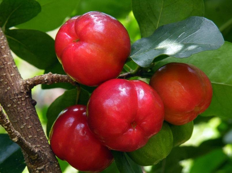 Những mùa trái cây nổi tiếng ở miền Tây 15