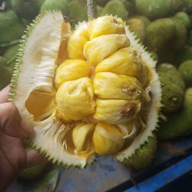 Những mùa trái cây nổi tiếng ở miền Tây 3