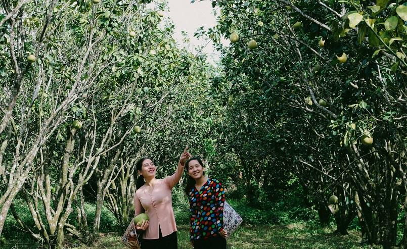 Danh sách các khu miệt vườn trái cây nổi tiếng ở miền Tây 5
