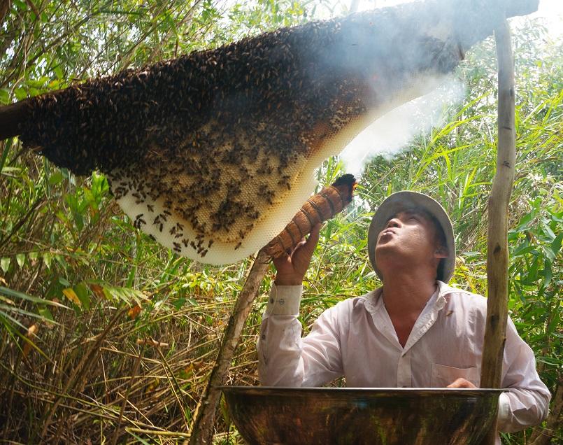 Kinh nghiệm du lịch trọn vẹn rừng U Minh Hạ ở Cà Mau 16