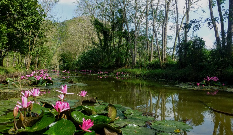 Kinh nghiệm du lịch trọn vẹn rừng U Minh Hạ ở Cà Mau 13