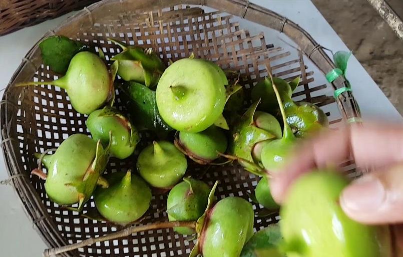 Những mùa trái cây nổi tiếng ở miền Tây 9
