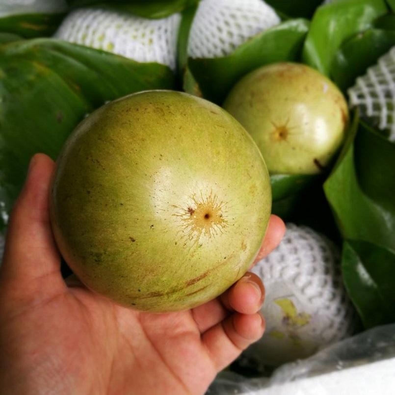 Những mùa trái cây nổi tiếng ở miền Tây 23