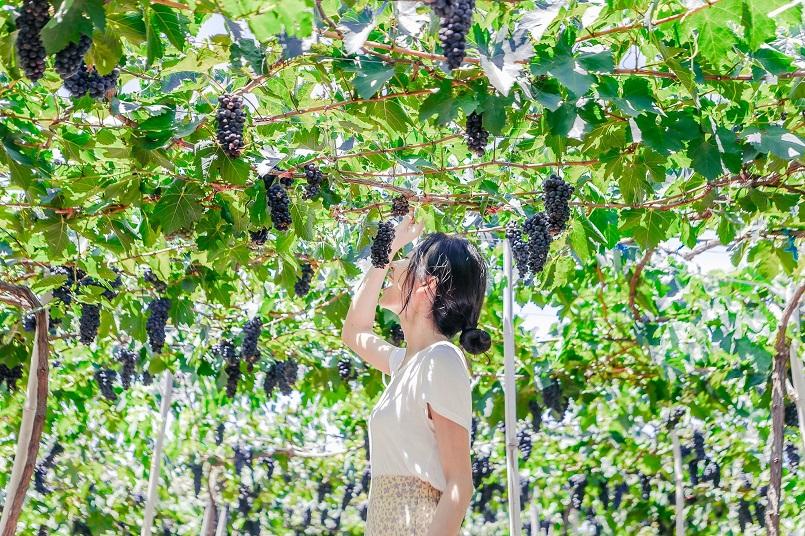 Kinh nghiệm du lịch phan Rang - Ninh Thuận chi tiết 18