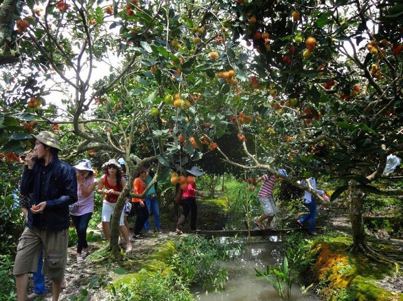Danh sách các khu miệt vườn trái cây nổi tiếng ở miền Tây 7