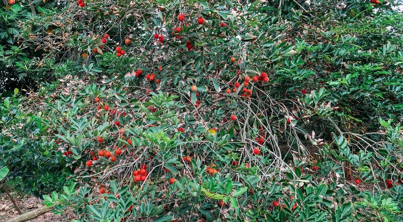 Danh sách các khu miệt vườn trái cây nổi tiếng ở miền Tây 1