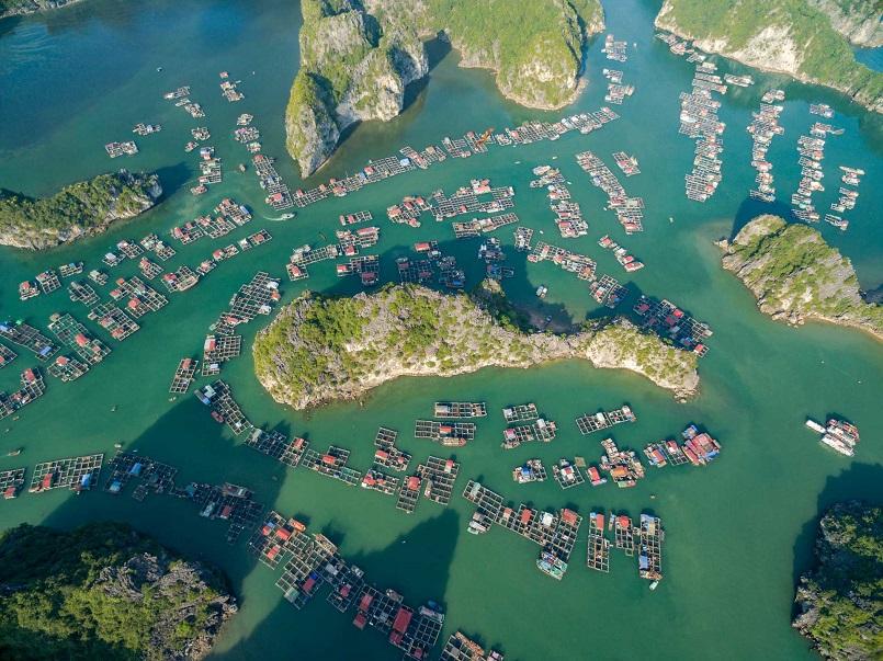 Tổng hợp kinh nghiệm du lịch đảo Cát Bà mới nhất 2