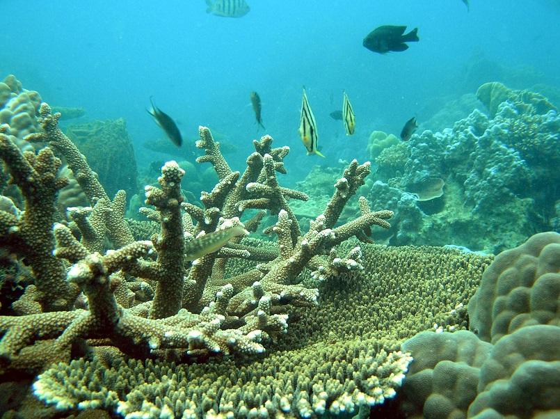 """Du lịch đảo Thổ Chu thú vị với kinh nghiệm """"phượt biển"""" có 1-0-2 ảnh 12"""