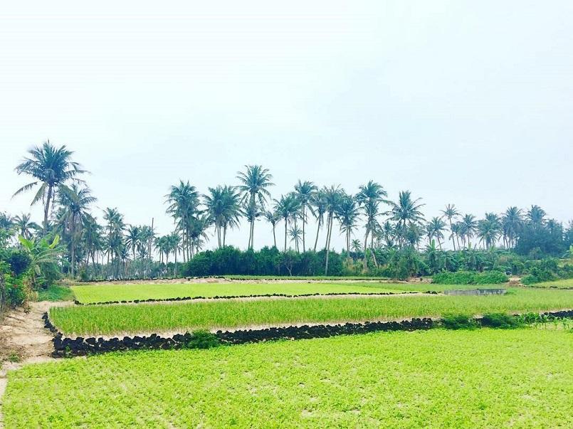 Kinh nghiệm du lịch đảo Lý Sơn khám phá mọi điểm hot trend thu hút giới trẻ 3