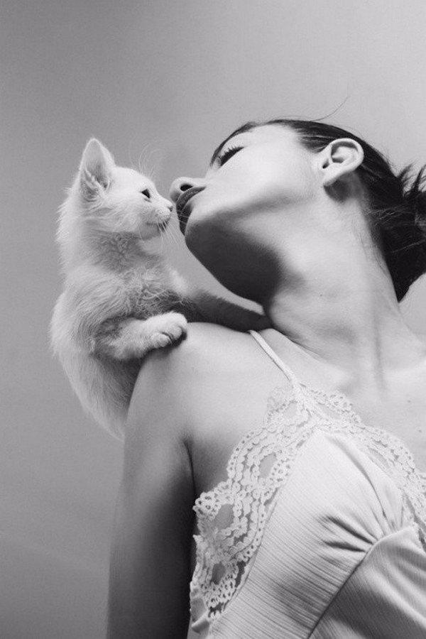 Vì sao nên yêu một cô gái thích mèo? 2