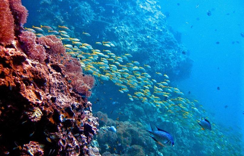 Du lịch Samui - Khám phá trọn vẹn thiên đường biển tuyệt đẹp ở Thái Lan 14