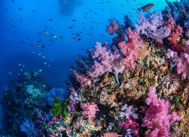 Du lịch đảo Thái Lan với Top các hòn đảo đẹp như thiên đường hot 8