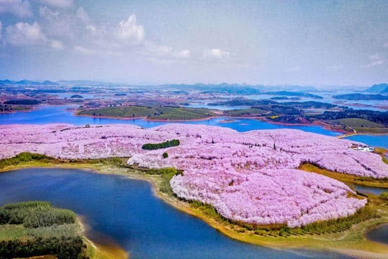 Vườn hoa Anh Đào Cửu Châu