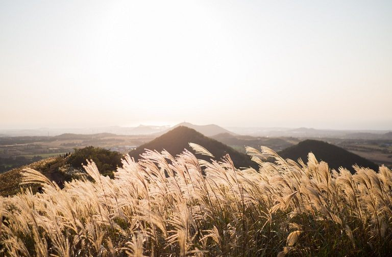 Cánh đồng cỏ lau - Sangumburi