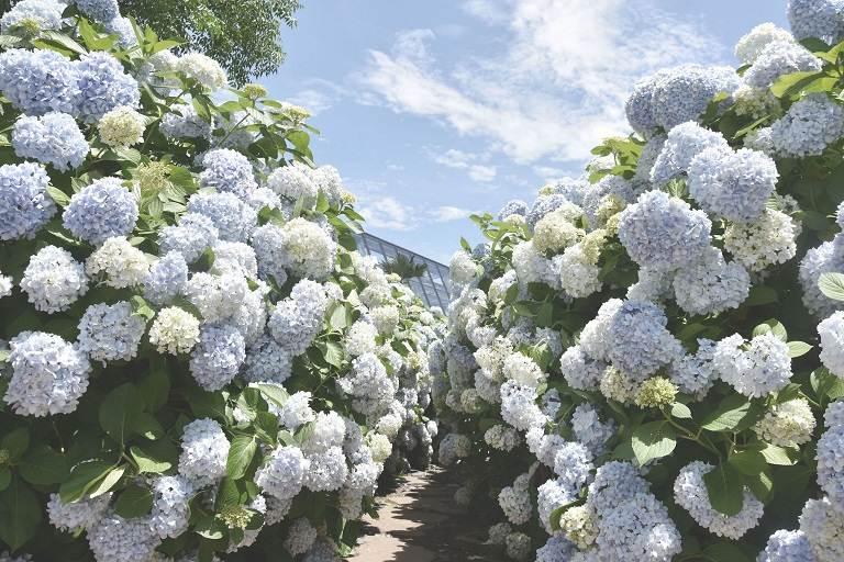 Đồi Camellia - Địa điểm du lịch ở Jeju