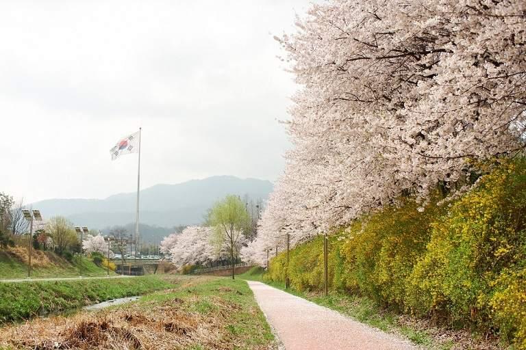 Địa điểm ngắm hoa Anh Đào ở Hàn Quốc