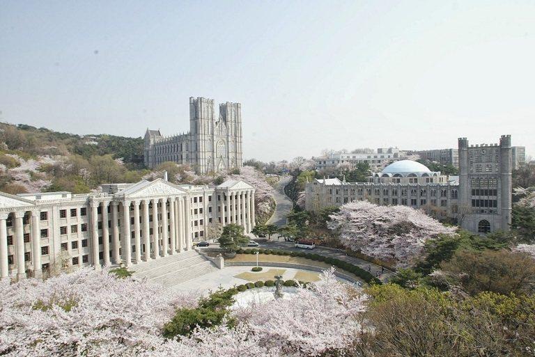 Hoa Anh Đào trong khuôn viên của đại học Kyung Hee