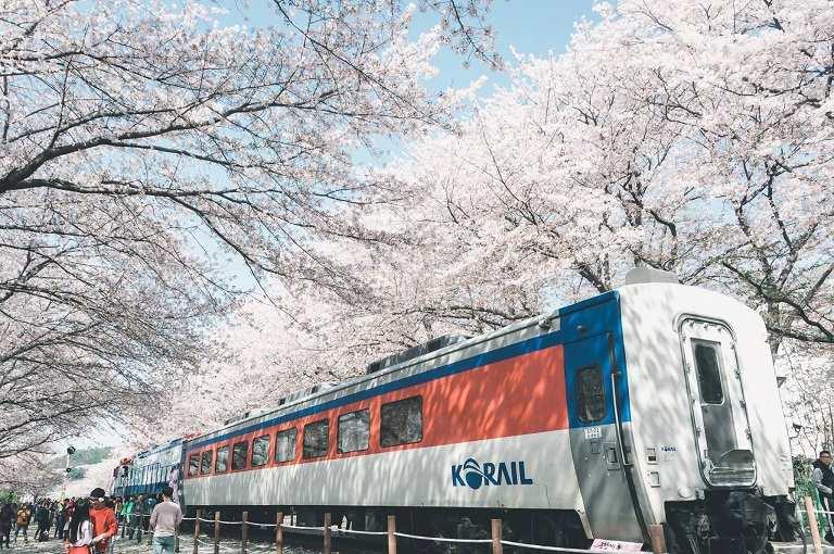 Địa điểm ngắm hoa Anh Đào ở Nhà ga Gyeonghwa Station