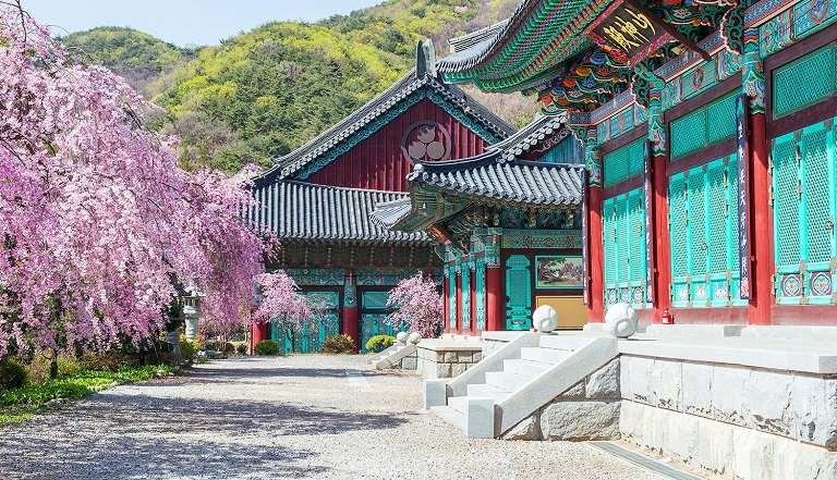 Địa điểm ngắm hoa Anh Đào trong các cố cung Hàn Quốc