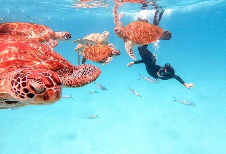 Đảo rồng Tioman - địa điểm du lịch tại Malaysia