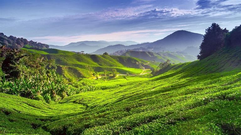Cao nguyên Cameron - địa điểm du lịch tại Malaysia
