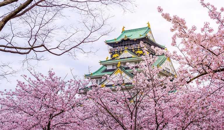 Vẻ đẹp thành Osaka trong mùa hoa Anh Đào nở (Ảnh sưu tầm)