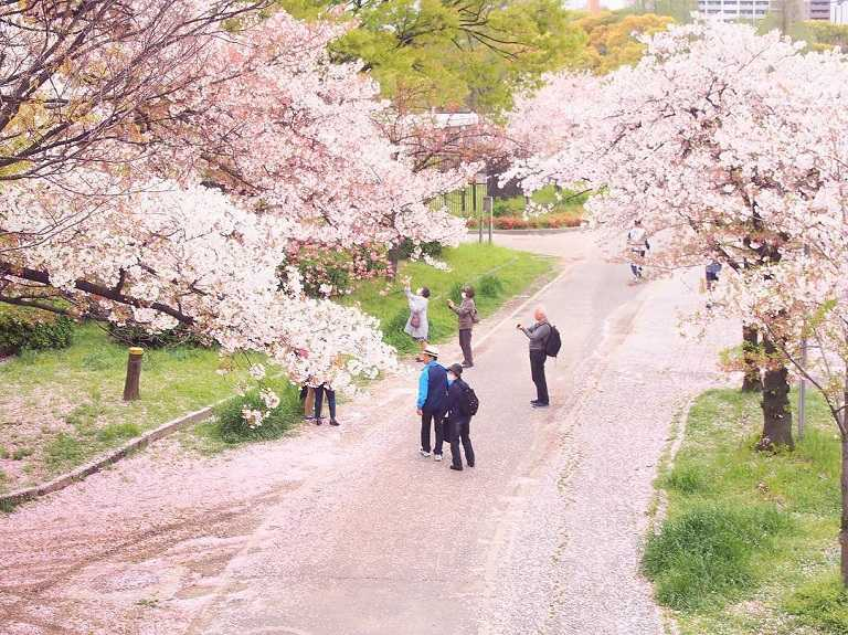 Những con đường hoa Anh Đào ở công viên Daisen