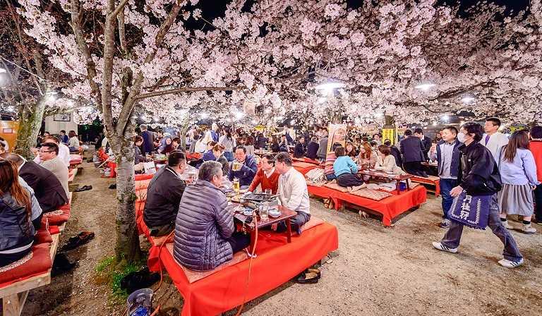 Công viên Maruyama - Địa điểm ngắm hoa Anh Đào ở Nhật Bản