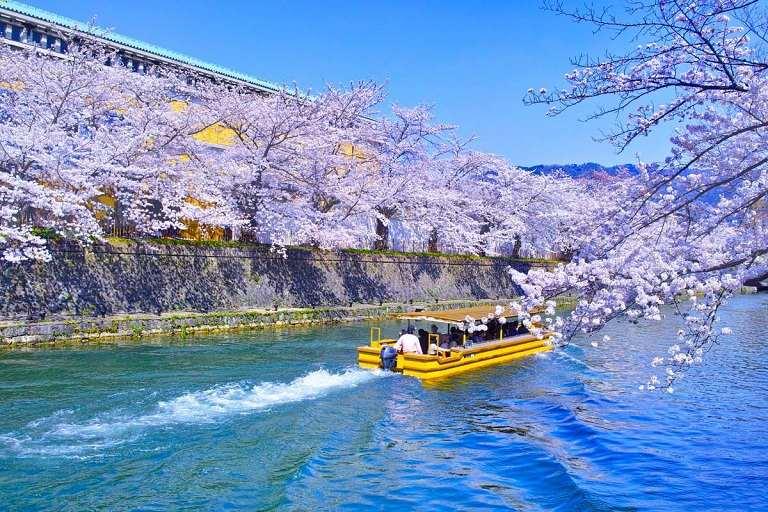 Phong cách ngắm hoa Anh Đào trên sông