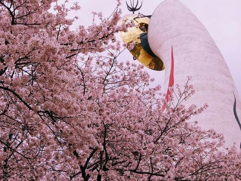 Hơn 5500 gốc hoa Anh Đào cùng nở rộ tại công viên Expo'70