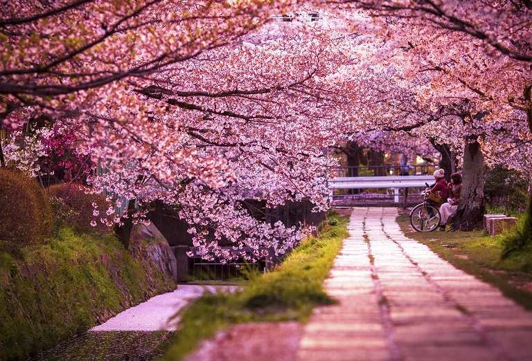 Philosopher's Path - Địa điểm ngắm hoa Anh Đào ở Nhật Bản