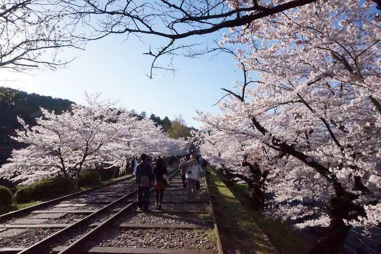Keage Incline ở Kyoto - Địa điểm ngắm hoa Anh Đào ở Nhật Bản