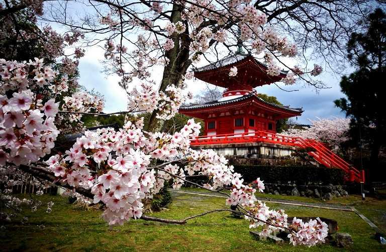 Đền Heian Shrine - Địa điểm ngắm hoa Anh Đào ở Nhật Bản