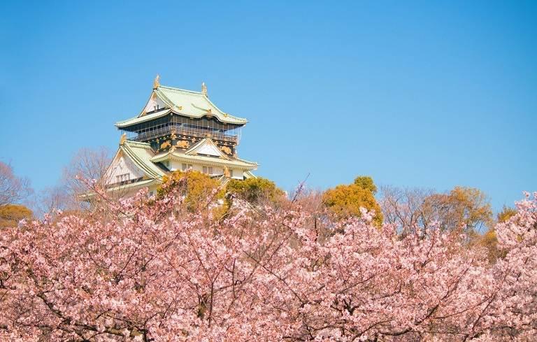 Biển hoa Anh Đào tại chùa Katsuo-ji