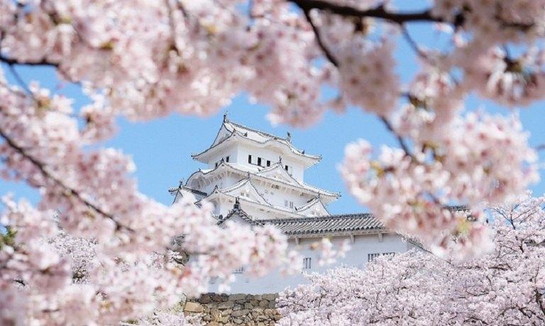 Thành Nijo - Địa điểm ngắm hoa Anh Đào ở Nhật Bản