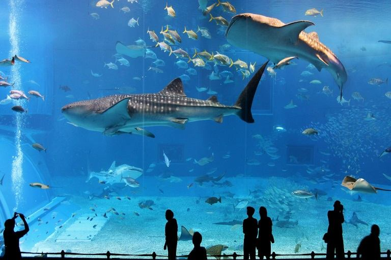 Osaka Aquarium Kaiyuka