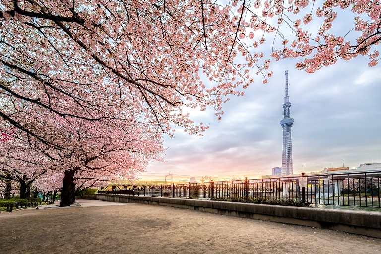 Du lịch Tokyo những ngày Xuân