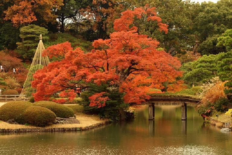 Du lịch Tokyo mùa Thu