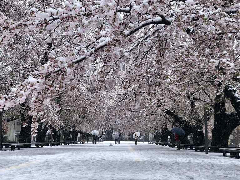Du lịch Tokyo mùa tuyết rơi